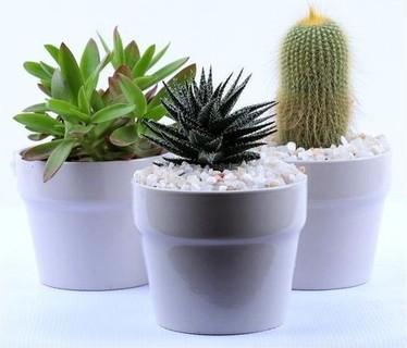 Tasneem Plants Succulents collection Plant