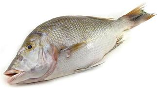 Shour Fish - Big
